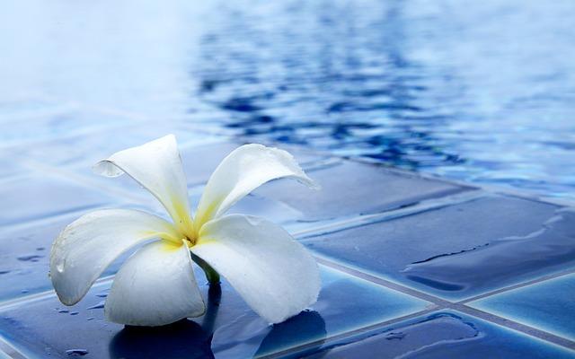 kytka u bazénu